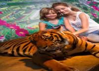 Tigerkos