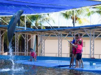Delfinene  kunne hoppe kjempehøyt